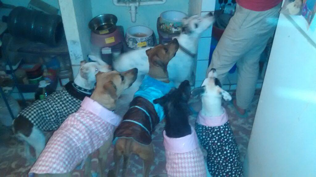 rescues and my dogs