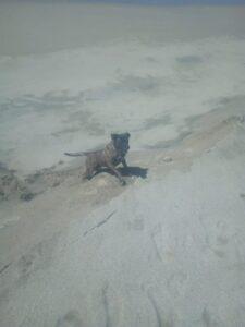 Apollo on the beach